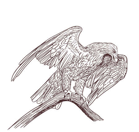 prey: eagle monochrome drawing on white