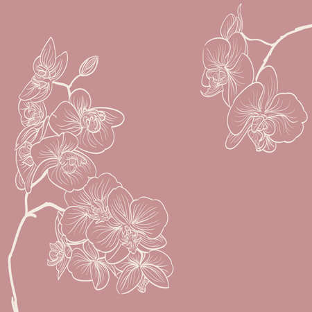 vector artwork: orchid flowers illustration as frame background