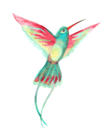 fragility: watercolor hummingbird with open wings on white