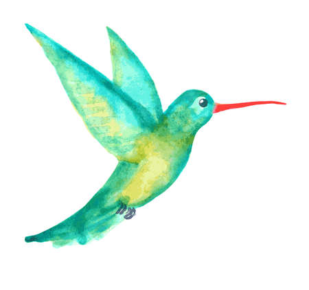 hummingbird: watercolor hummingbird on white
