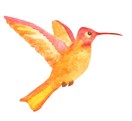 pollination: watercolor orange hummingbird with open wings