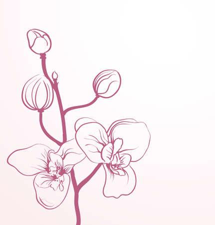 lentebloemen in line-art stijl