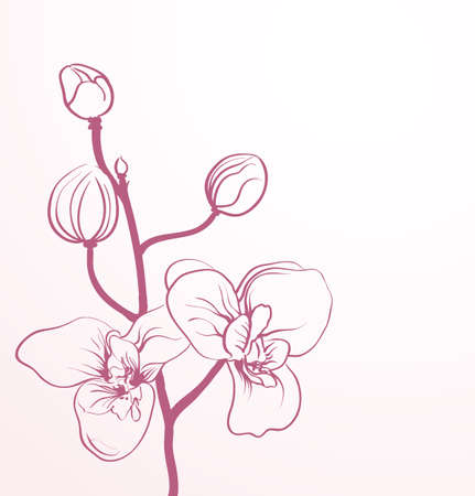 lineart: spring flowers in line-art style Illustration