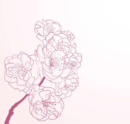 cherry tree: cherry flowers in line-art style Illustration