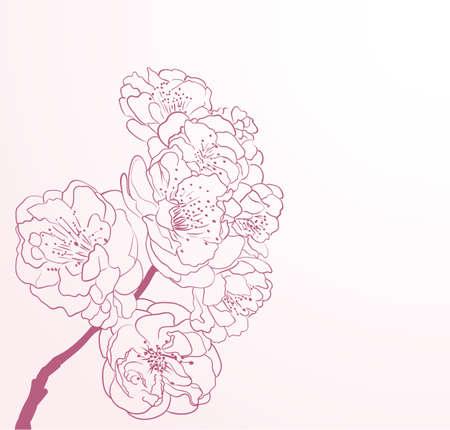 nectars: cherry flowers in line-art style Illustration