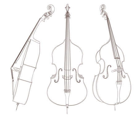 contra bass: contrabass drawing on white. vector illustration Illustration