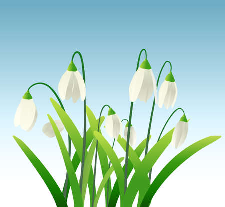 garden flowers: snowdrops background Illustration