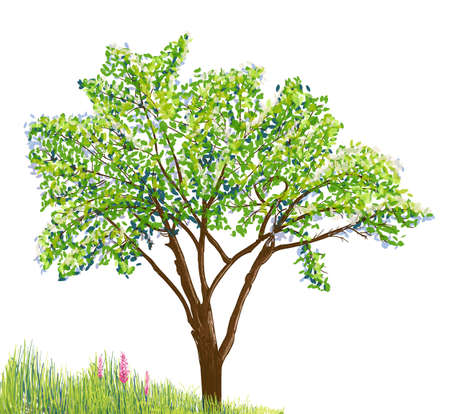 tree grass: tree and grass with flowers drawing on white