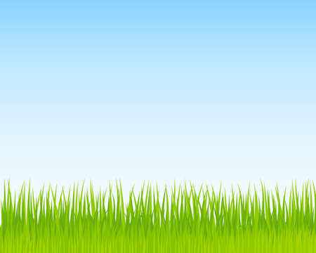 sky and grass: Green grass and blue sky background. Spring nature background for Your design. Vector Illustration