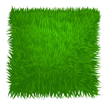 grass land: Green grass texture rectangle isolated on white. Vector illustration