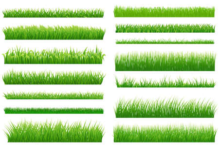 春の緑の草の水平方向の罫線のセットです。あなたの設計のための白い背景の上の緑の草のコレクションです。草と自然の景観の要素をデザインし
