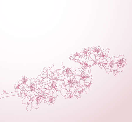 blossoming: blossoming tree line art hand drawn illustration. spring stylish horizontal background with pink plum flowers vector