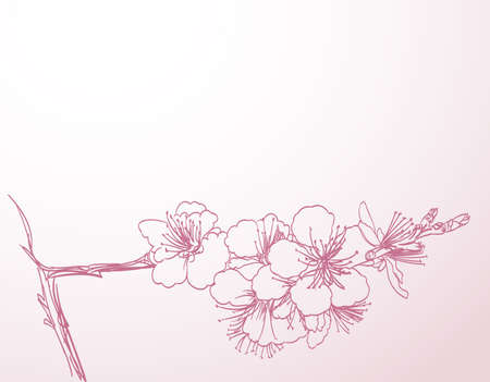 cherry tree: blossoming tree line art hand drawing. spring stylish horizontal background with pink plum flowers outline vector Illustration