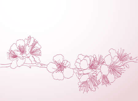 cherry tree: blossoming tree line art hand drawing. spring stylish background with pink plum flowers outline vector Illustration