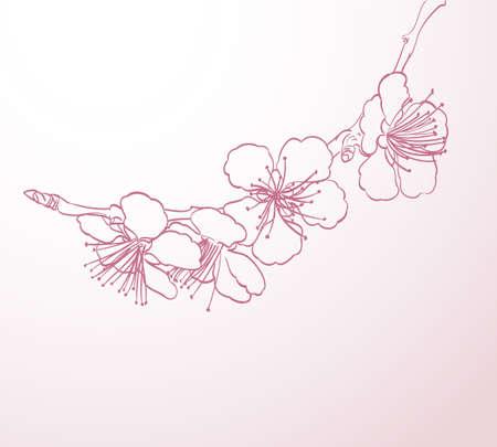 sbocciare fiori di disegno a mano al tratto. elegante sfondo primavera con contorno fiori rosa vettore