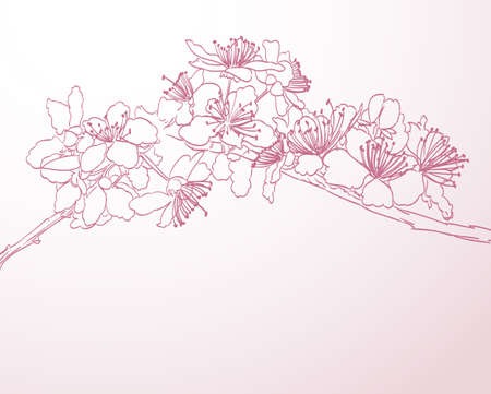 cherry branch: blossoming tree line art hand drawn illustration. spring background with pink plum flowers vector