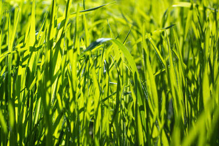 green background: green grass macro background