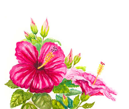 tropical garden: watercolor hibiscus background. hand painted illustration
