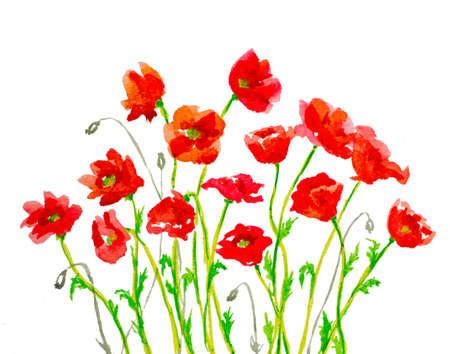 poppy: pintados a mano acuarela amapolas rojas en blanco hechas de trazos de pincel Foto de archivo