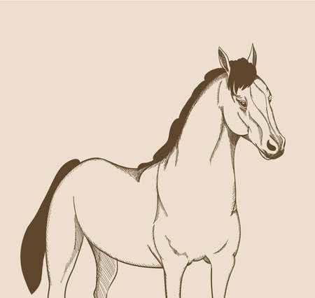 draft horse: horse drawing. vector illustration