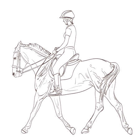 equestrian: a horse rider drawing. equestrian training line-art illustration. vector