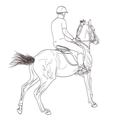 equestrian sport: horse rider line art hand drawn illustration. equestrian sport training theme. vector Illustration