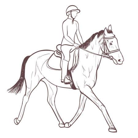 a horse rider drawing. equestrian sport training line-art vector Illustration