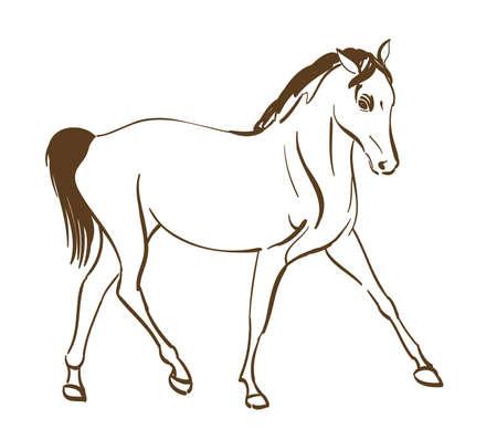 draft horse: horse line art drawing. vector