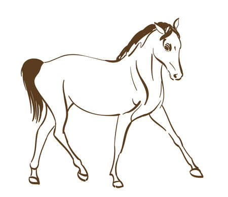 horse line art drawing. vector