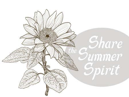 Sonnenblumen und die Sommer Geist Zitat teilen. Vektor Standard-Bild - 62142113