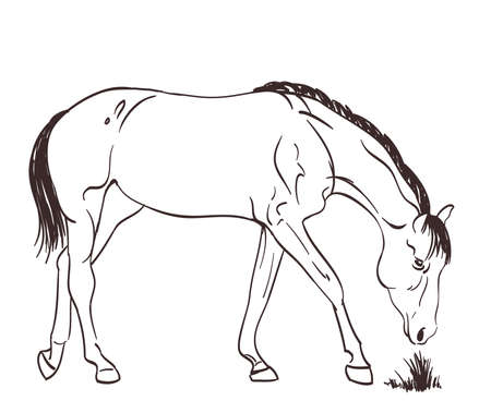 graze: horse eating grass. vector sketch illustration