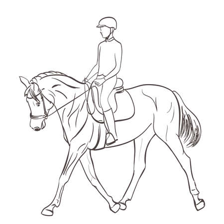 equestrian: horse rider sketch. equestrian theme vector illustration