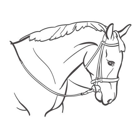 horse head line art drawing. equestrian training theme illustration. vector
