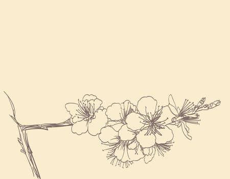 bloeiende boom lijntekeningen hand tekenen. spring stylish horizontale achtergrond met pruimen bloemen overzicht