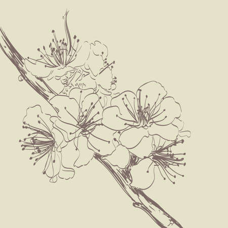 flower blooming: Blooming cherry tree flowers hand drawn illustration.