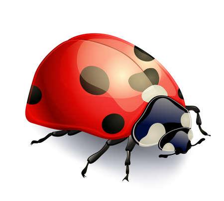 red ladybug isolated on white. realistic vector illustration