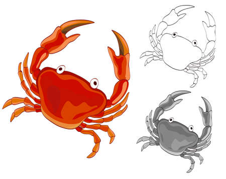 Crab drawing with grayscale and coloring page versions. vector illustration Illustration