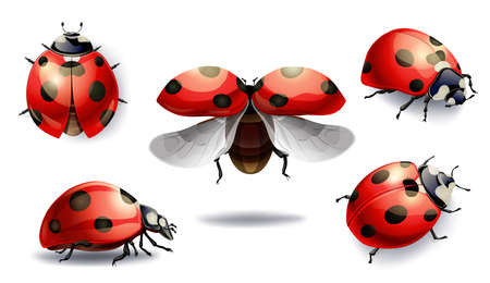 Set van rode lieveheersbeestje geïsoleerd op wit. vectorillustratie Vector Illustratie