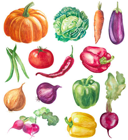 eggplant: set of vegetables isolated on white. watercolor hand drawn illustration of peppers, pumpkin, onions, radish, beet, tomato, cabbage, eggplant and beans Stock Photo