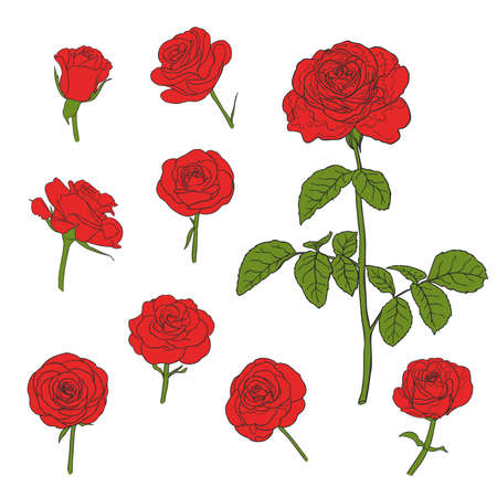 Set of hand drawn roses vector illustrations