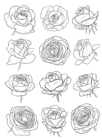 장미 세트 화이트 스케치. 손으로 그린 꽃