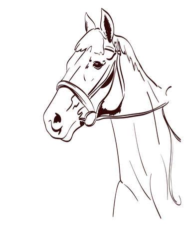 horse head vector illustration in line art style. equestrian theme drawing Иллюстрация