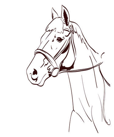 horse head vector illustration in line art style. equestrian theme drawing Illustration