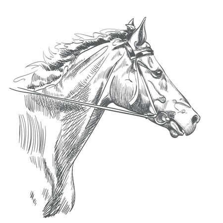 흰색 그리기 말의 머리입니다. 일러스트