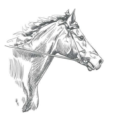 Head of horse drawing on white.
