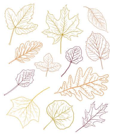 다양 한 종류의 잎 화이트 절연가 색에 설명합니다. 벡터 일러스트 레이 션