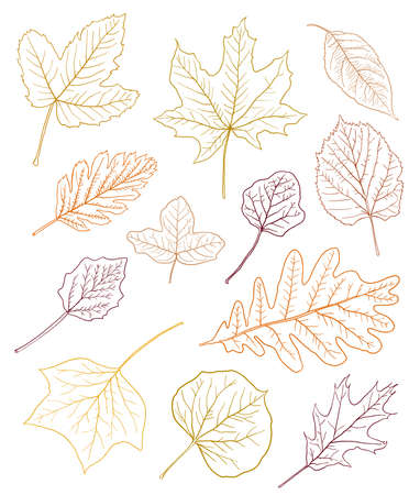 various types of leaves outlines in autumn colors isolated on white. vector illustration