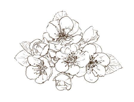 hand drawn sakura flowers. tree blossom on white line art vector illustration Vetores