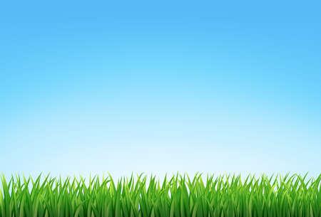 vector green grass and blue sky Vector Illustratie