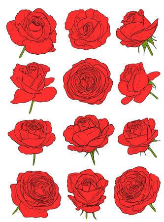 red roses set on white. hand drawn flowers vector illustration